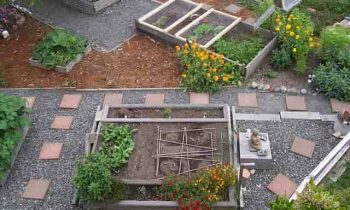 Must for Backyard Gardening