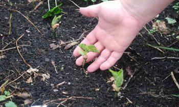 Making Fertile Soil