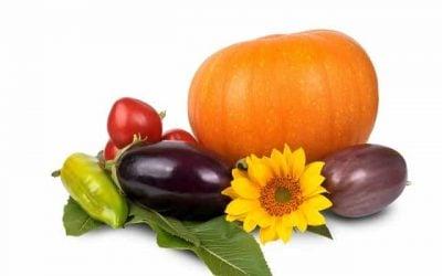 Growing Trend of Organic Gardening