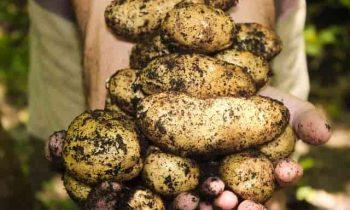 10 Step of Organic Gardening