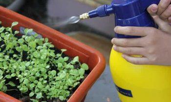 Fighting Plant Enemies